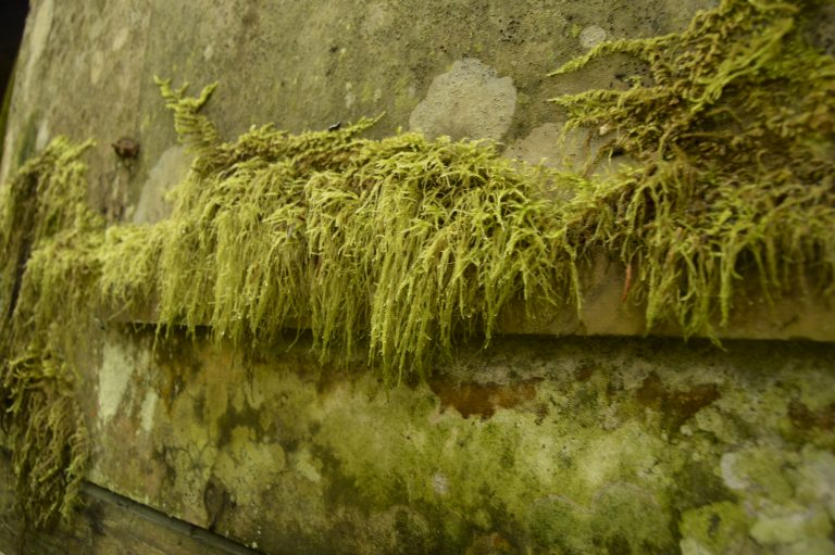 Long Island moss Kodiak AK | FishwifeWrites